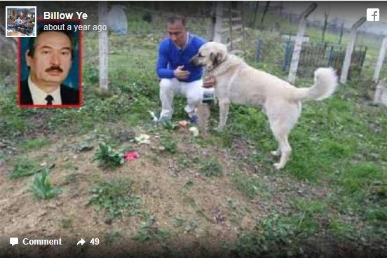 τάφος σκύλος επισκέπτεται τον τάφο του ιδιοκτήτη Σκύλος