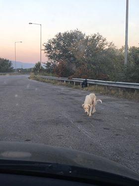 Σκύλος αδέσποτο