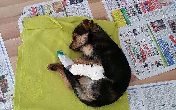 υιοθεσία αδέσποτων Σκύλος κακοποίηση σκύλων