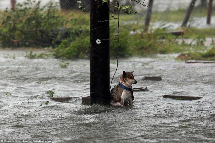τυφώνας Χάρβεϊ διάσωση σκύλου Daily Mail