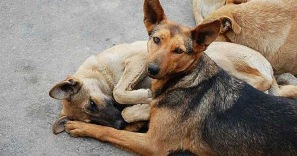 Πώς να σώσετε ένα ζώο από φόλα; Εκατοντάδες σκύλοι και γάτες χάνουν τη ζωή τους κάθε χρόνο στην χώρα μας…