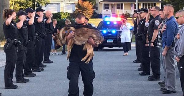 Αστυνομικοί αποχαιρετούν τον συνάδελφο σκύλο τους που πέθανε από καρκίνο
