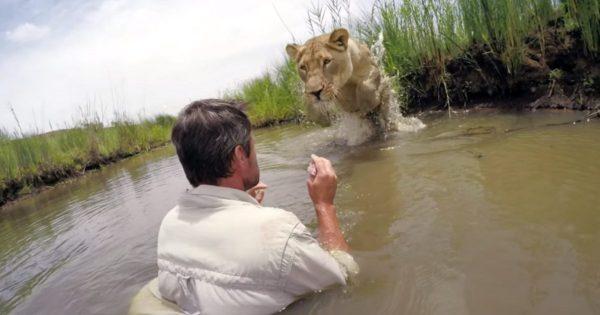 Άντρας σώζει μωρό λιοντάρι από βέβαιο θάνατο. 7 Χρόνια μετά, αγνοεί τον κίνδυνο και το πλησιάζει σε απόσταση αναπνοής..