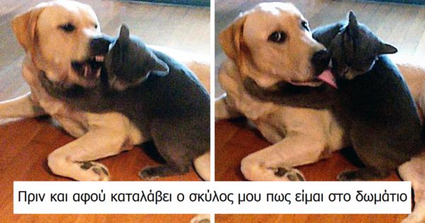 Σαν τον Σκύλο με την Γάτα: 10 Αστείες αποδείξεις ότι οι γάτες και οι σκύλοι δε θα καταφέρουν ποτέ να τα βρουν μεταξύ τους!