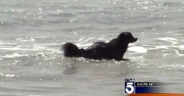 Σκύλος ακούει κραυγές από τη θάλασσα και βουτάει αμέσως μέσα. Η συνέχεια; Θα σας κόψει την ανάσα!