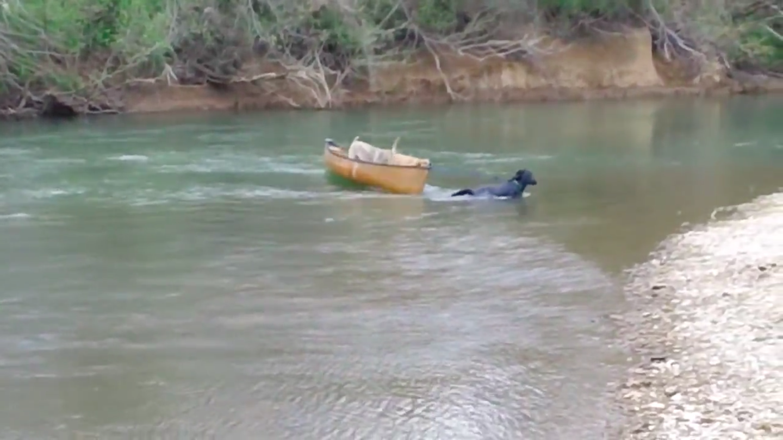 σκυλιά εγκαταλήφθηκαν εγκαταλελειμμένα σκύλια Δύο σκυλιά που εγκαταλείφθηκαν σε βάρκα φωνάζουν απελπισμένα για βοήθεια όταν ένα απρόσμενο «πλάσμα» εμφανίζεται και κινείται προς το μέρος τους