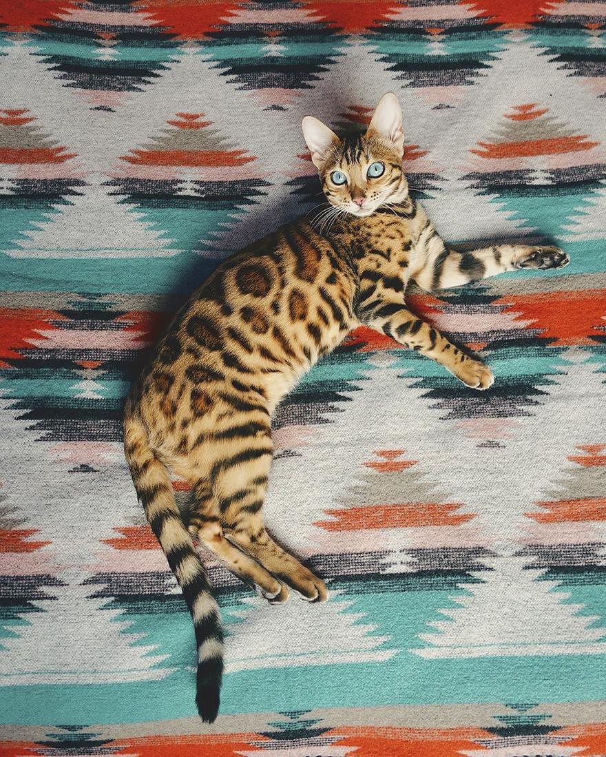 φωτογραφίες φωτογραφία Γάτα