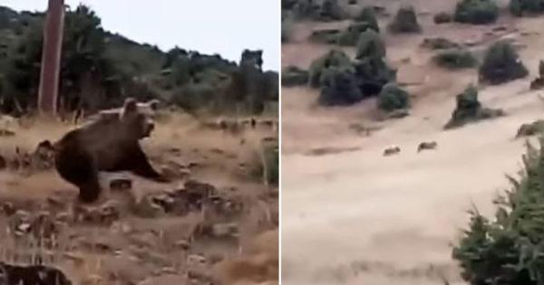 Άντρας έβγαλε βόλτα τον σκύλο του στην Καστοριά είδε αρκούδες να τρέχουν κατά επάνω του (vid)