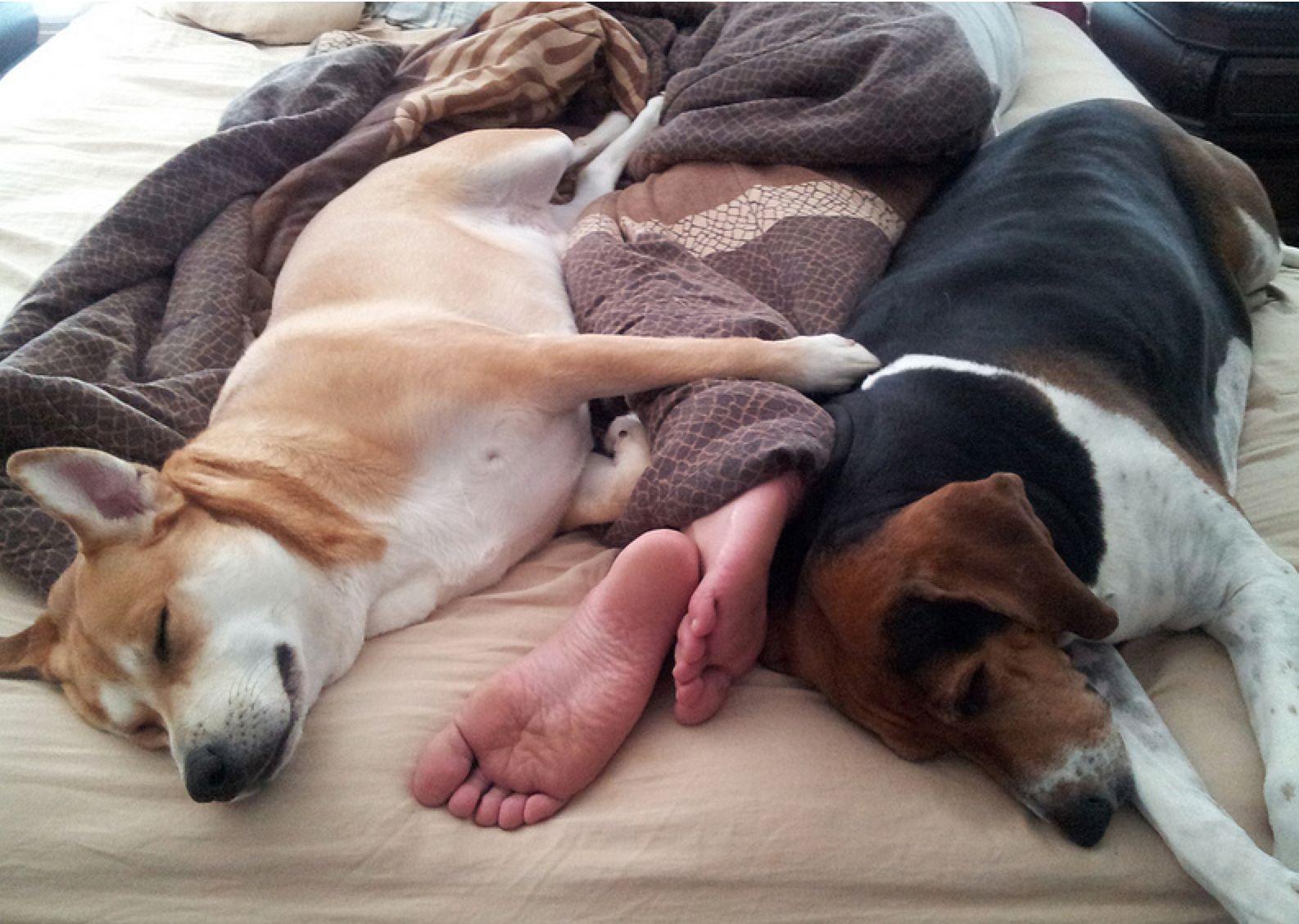 dog_bed