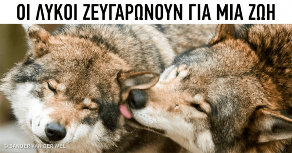 12 συναρπαστικά πράγματα για τα ζώα που δε θα πιστεύετε ότι είναι ισχύουν στ΄αλήθεια