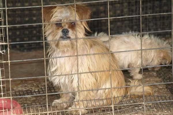 Λασίθι καταφύγιο ζώων κακοποίηση σκύλων διάσωση σκύλων διάσωση αδέσποτων