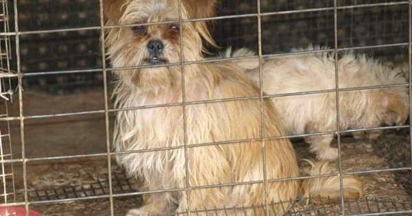 Έσωσαν δεκάδες εξαθλιωμένα αδέσποτα σκυλιά που ζούσαν φυλακισμένα σε «καταφύγιο» – κολαστήριο στον Άγιο Νικόλαο Λασιθίου Κρήτης