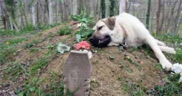 Κάθε φορά που επισκεπτόταν τον τάφο του πατέρα του αντίκριζε ΑΥΤΗΝ την εικόνα. Τόσο πιστός του ήταν ο σκύλος του!