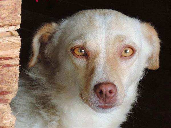 Χαρίζονται υιοθετείστε υιοθεσία σκύλοι κοκόνι