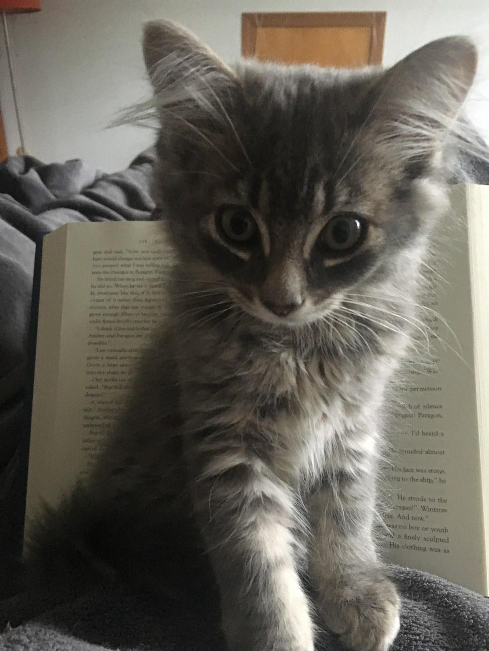 καρκίνος του μαστού Καρκίνος γατούλα γάτες γάτα καρκίνος Γάτα
