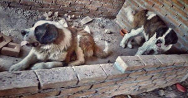 Δύο σκύλοι στο Μεξικό διασώθηκαν από ένα μπαλκόνι στο οποίο πέρασαν τα τελευταία 4 χρόνια παγιδευμένοι