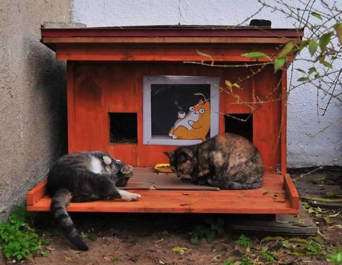 Φιλοζωϊκή γάτες αδέσποτες γάτες