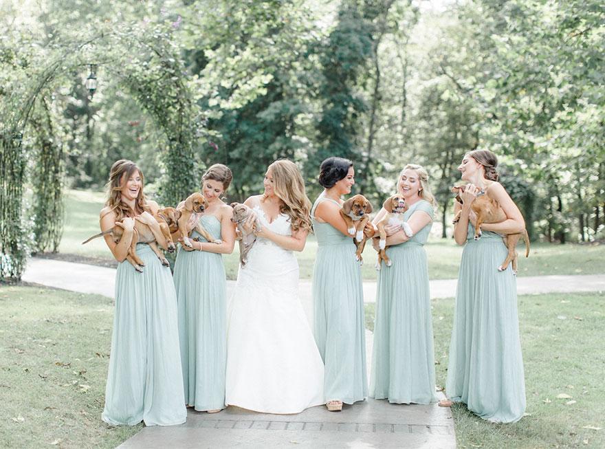 σκυλιά γάμος