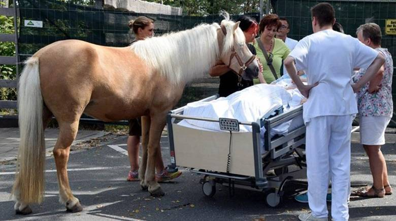 zawoy-horse-meets-with-dying-owner