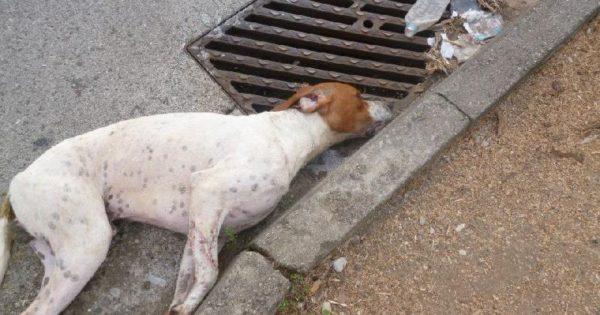 Νεκρά από φόλες 10 αδέσποτες γάτες και σκύλοι στο κέντρο της Λάρισας