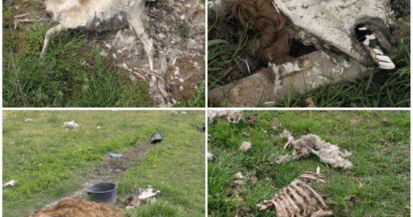 Πάτρα: Αύριο η δίκη για τα νεκρά ζώα στην «Ιπποκάμηλο»