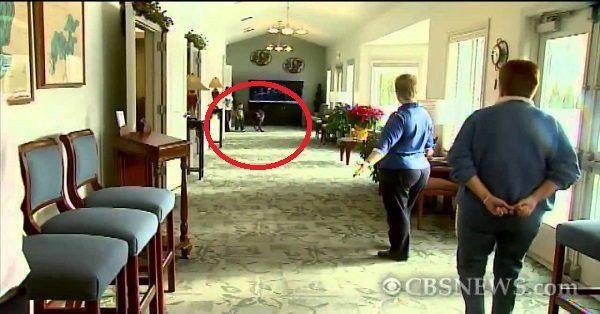 Έβαλαν ένα σκύλο μέσα στο γραφείο κηδειών και άρχισαν να βιντεοσκοπούν. Ο λόγος; Μας έκανε να δακρύσουμε