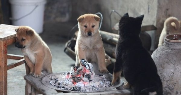 Αυτά τα παγωμένα κουταβάκια κλαίγανε ασταμάτητα, μέχρι να ανάψει η φωτιά για να ζεσταθούν…
