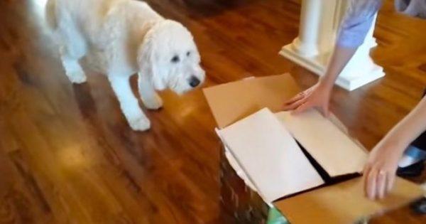 Έδωσαν στο σκύλο ένα κουτί με δώρο-έκπληξη για τα γενέθλιά του. Αυτό που είχε μέσα; Δε θα το πιστεύετε!