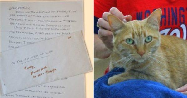 Ετοιμοθάνατη γυναίκα γράφει ένα σπαρακτικό γράμμα στον μελλοντικό ιδιοκτήτη της γάτας της
