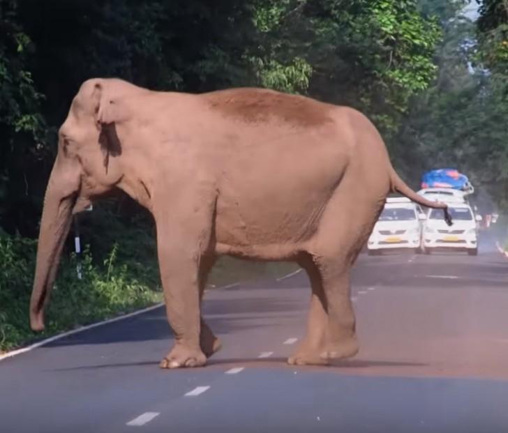 ελέφαντες κοπάδι βιντεο ελέφαντες βιντεο ελέφαντες ελέφαντας ελέφαντα