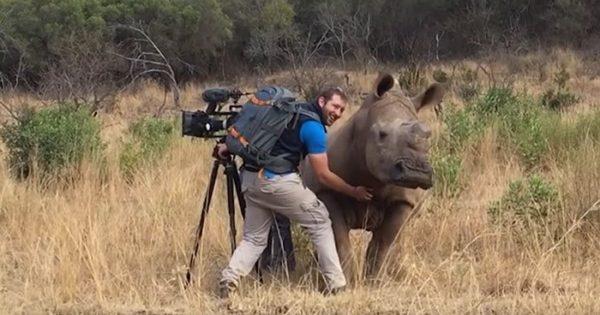 Αυτός ο ρινόκερος πλησίασε έναν κάμεραμαν και απαίτησε χάδια