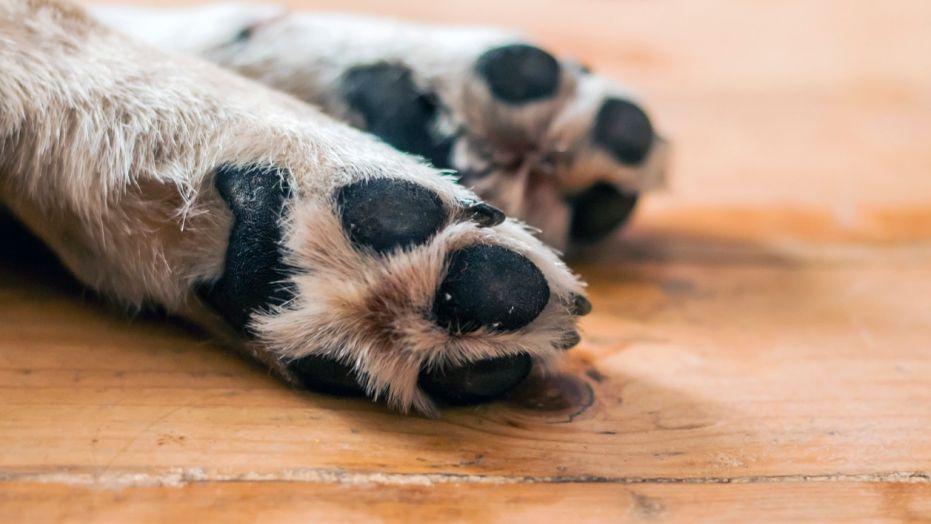 σκύλος πέθανε πέθανε η σκυλίτσα της πέθανε