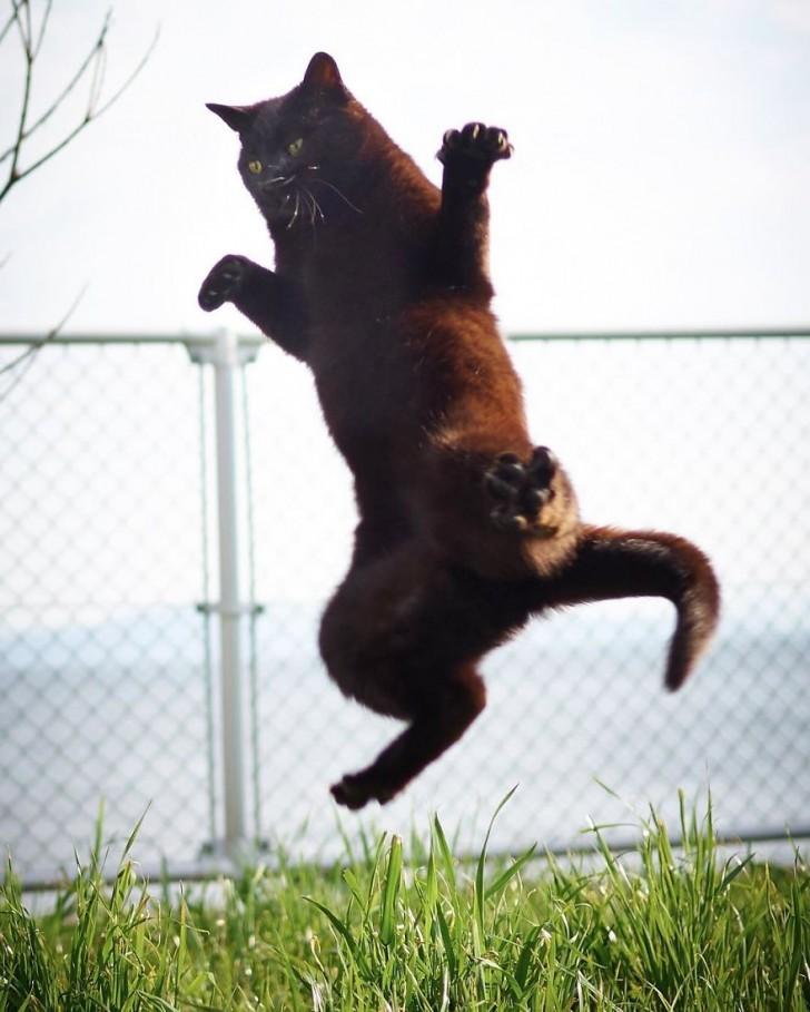 γάτα σε πόζες γάτα ninja