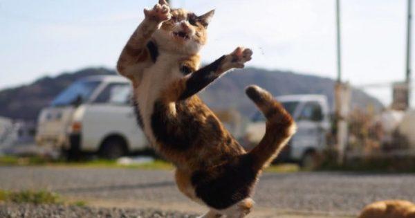 Φωτογράφος εξειδικεύεται στο να φωτογραφίζει γάτες σε πόζες νίντζα