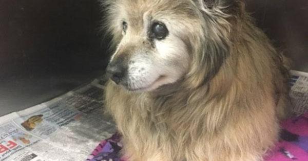 Αυτή η γυναίκα παράτησε τα πάντα μόλις είδε μια φωτογραφία αυτού του λυπημένου σκύλου και πήγε να τον υιοθετήσει