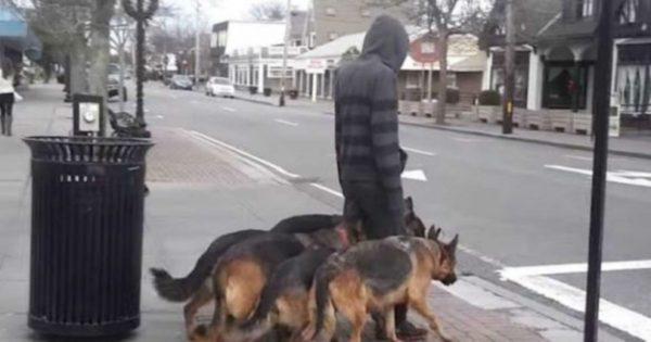Βγαίνει βόλτα με τους σκύλους του χωρίς λουριά. Θα σας αφήσει άφωνους η συμπεριφορά τους