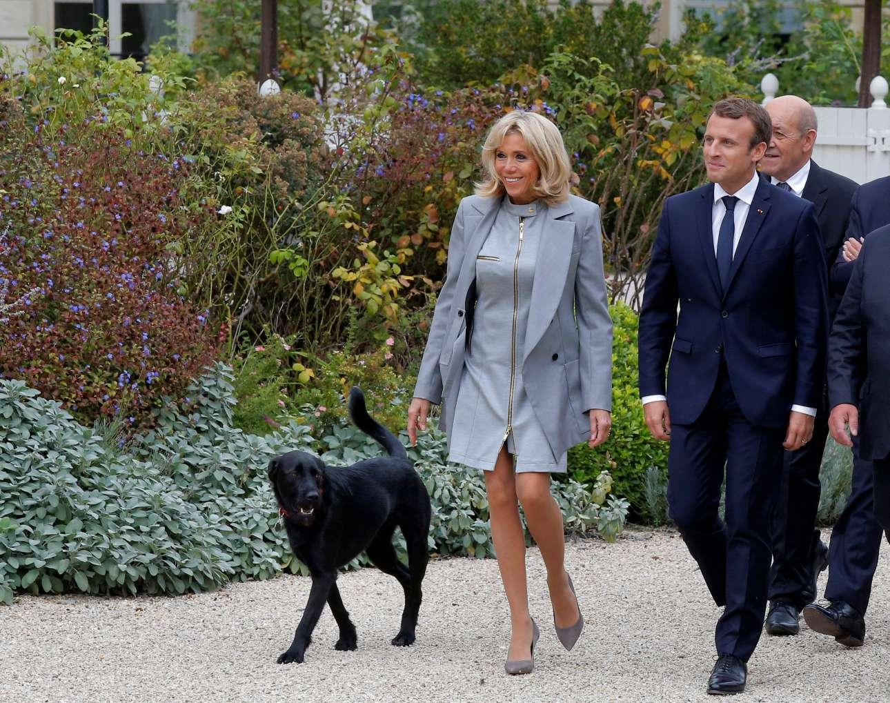 σκυλί μακρόν Μακρός σκύλος Μακρόν
