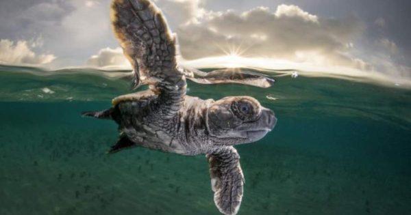 National Geographic: Αφιέρωμα για την μέρα των ζώων (pics)
