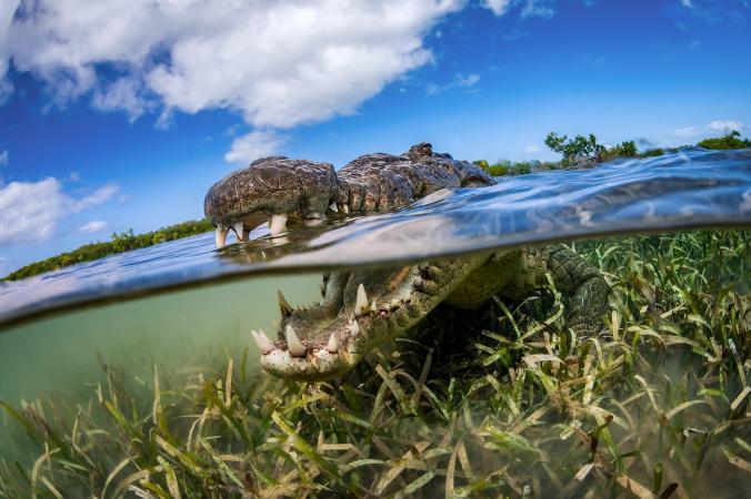 φωτογραφίες ζώων φωτογραφίες ζώα national geographic φωτογραφίες ζώων National Geographic