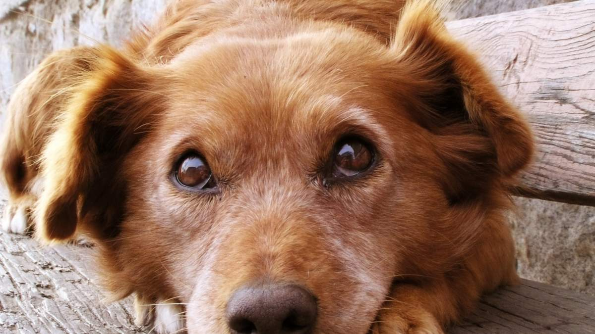 Καλιφόρνια Αδέσποτα pet shops