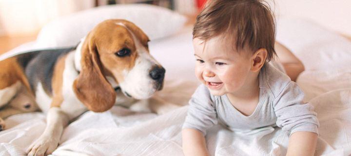 σκύλος ζηλεύει το νεογέννητο σκύλος ζήλεια ο σκύλος μου ζηλεύει το μωρό
