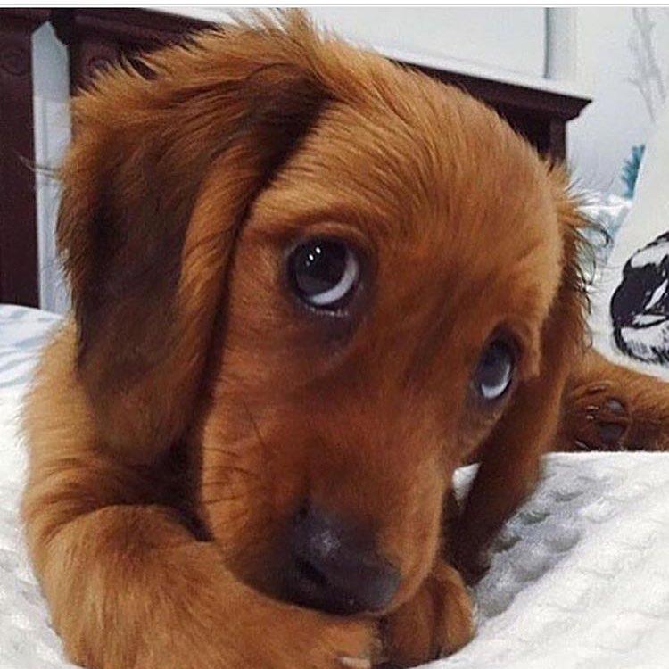 σκύλος θλιμμένος σκύλος θλιμμένο ύφος