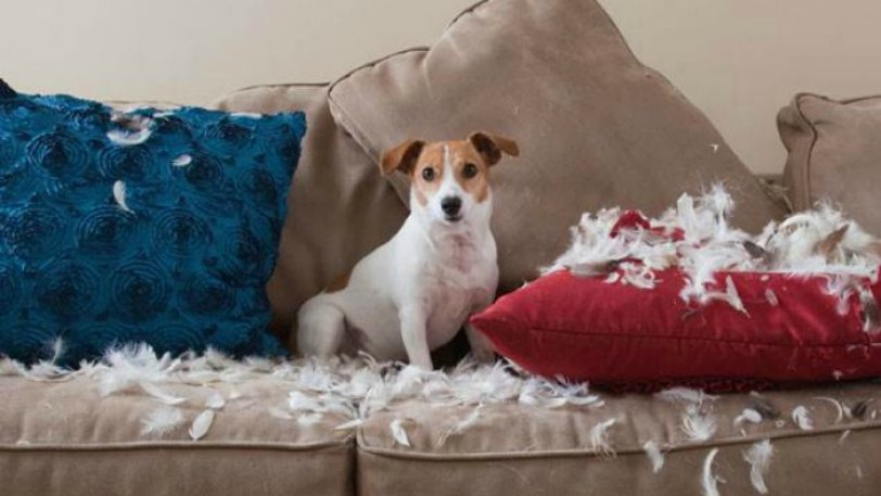 2d274905753024-dog-destroys-pillows.today-inline-large