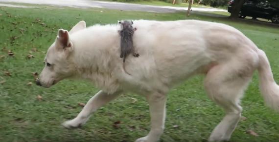 Αυτή η σκυλίτσα δεν είχε ποτέ δικά της κουταβάκια. Μια μέρα όμως το μητρικό της ένστικτο την οδήγησε…