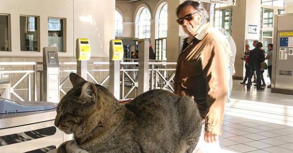 Η γάτα-μασκότ του Ηλεκτρικού στο Μοναστηράκι (εικόνες, video)