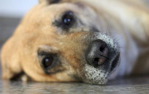 10 σημάδια ότι ο σκύλος μας γερνάει