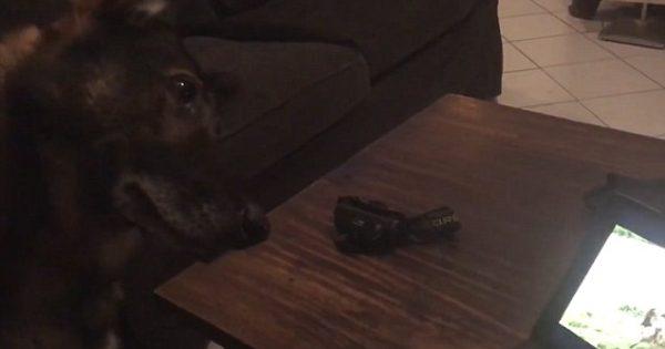 Η θλίψη ενός σκύλου K9 που βλέπει σε βίντεο στιγμές με τον νεκρό φίλο του
