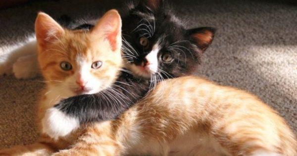 Το πιο αστείο βίντεο με γατάκια