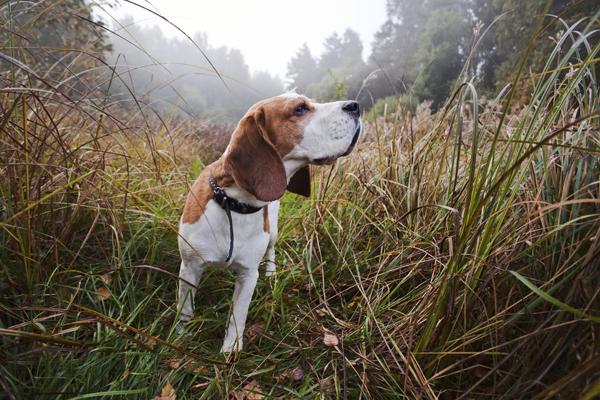 σκύλος μύτη Σκύλος σκύλοι μύτη μύτη σκύλου