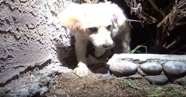 Ένα εγκαταλελειμμένο σκυλάκι σώζεται με έναν απίστευτο τρόπο… Περιμένε όμως να δείτε το τέλος!